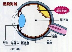 moumakuhakuri-1